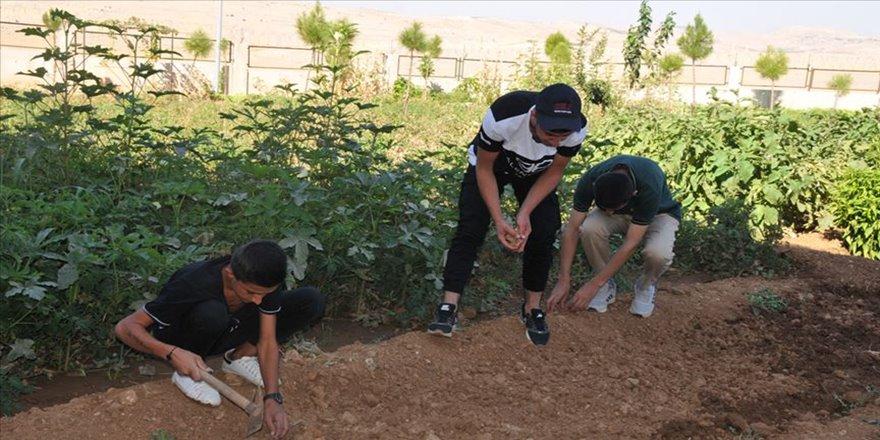 Öğrencilerden okul ve pansiyon bahçesinde meyve sebze üretimi
