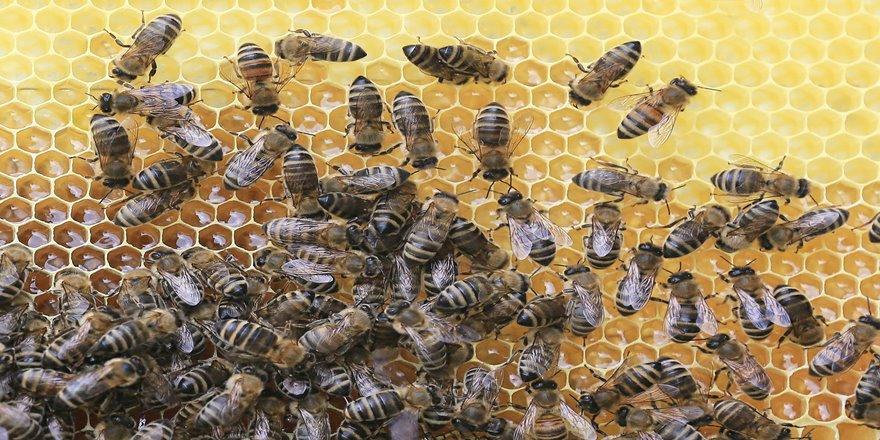 Uçakları düşürebilen arılar tehlike saçıyor