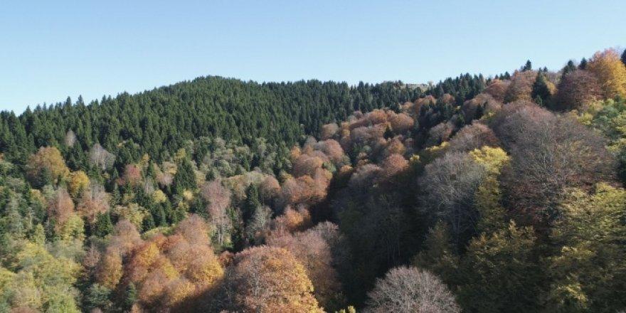 Karadeniz yaylalarında sonbahar