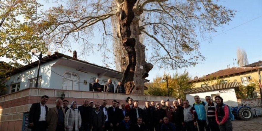 Bu ağaç tam 570 yaşında