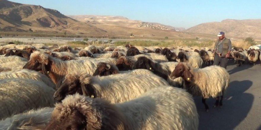 Soğuk hava bastırdı göçerler dönüş yoluna geçti