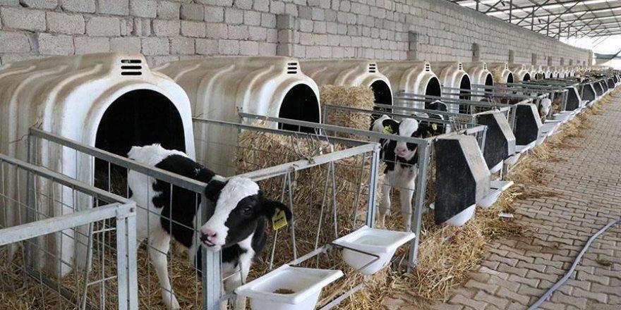 Hayvancılık desteklemeleri haczedilemeyecek