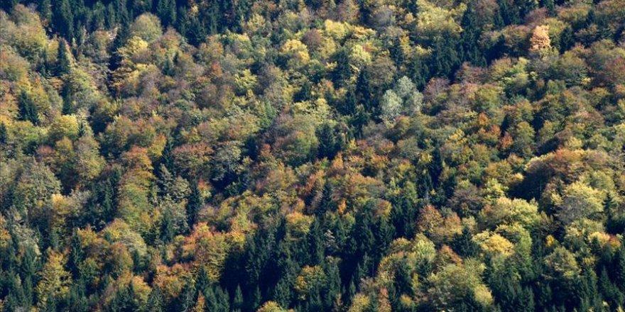 'Örümcek Ormanları' güz renkleriyle bir başka güzel