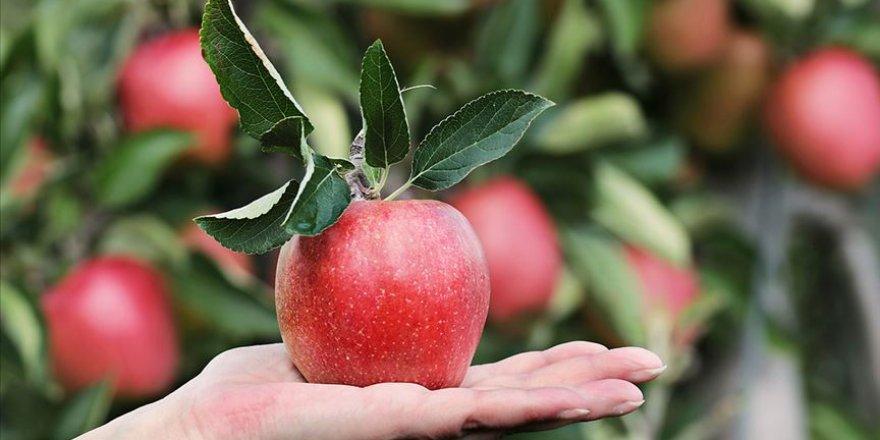 Bozulmadan 1 yıl saklanabileceği iddia edilen elma ürettiler