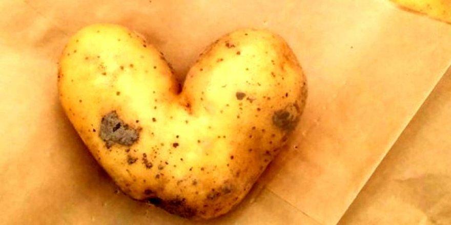 1 dönüm araziden 10 ton patates elde ettiler