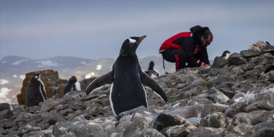 Antarktika seferleri meyvelerini veriyor