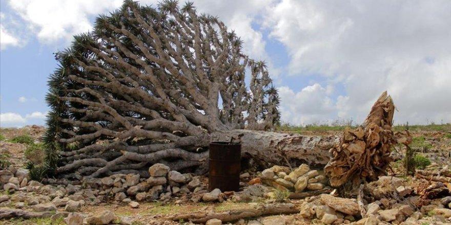 Yemen'in Sokotra Adası'nı vuran fırtına büyük çaplı hasara neden oldu
