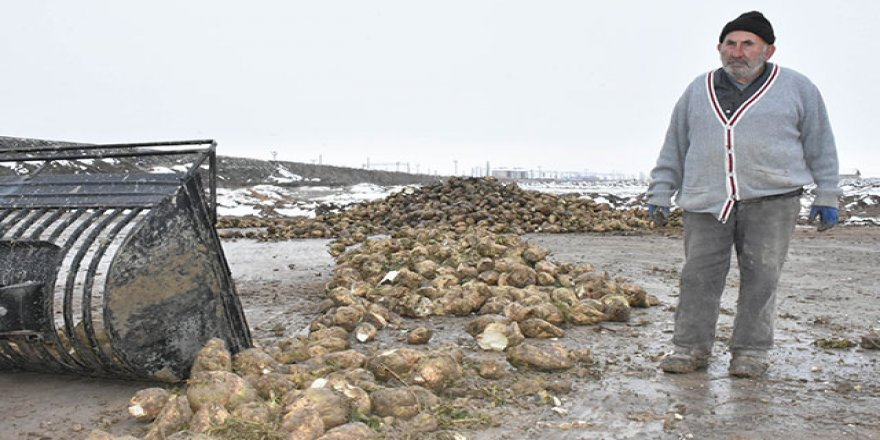 Sivas'ta soğuk havada pancar mesaisi