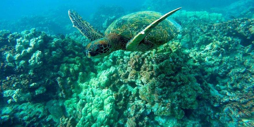 Küresel ısınma okyanuslardaki oksijen seviyesini düşürüyor: Su altı yaşam tehdit altında