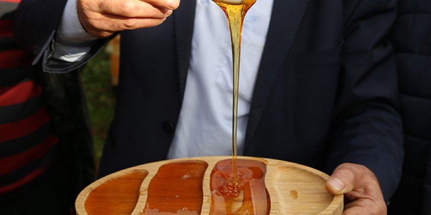 Kainat eczanesinden kestane balı tam bir şifa deposu