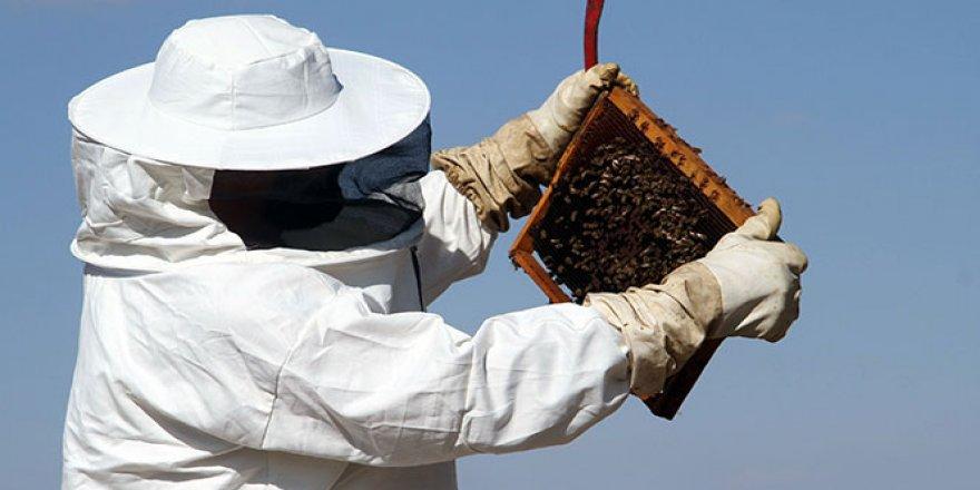 Bayburt'ta arıların 'tatlı uykusu' başladı