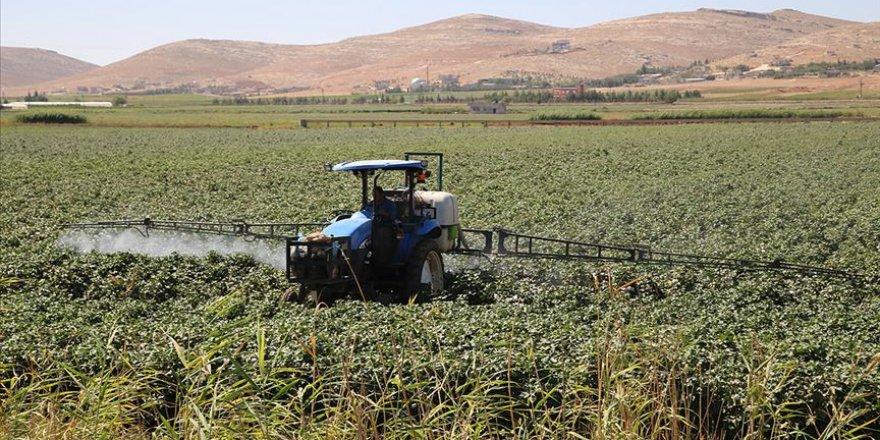Yağışlar GAP çiftçisine 'nefes' aldırdı