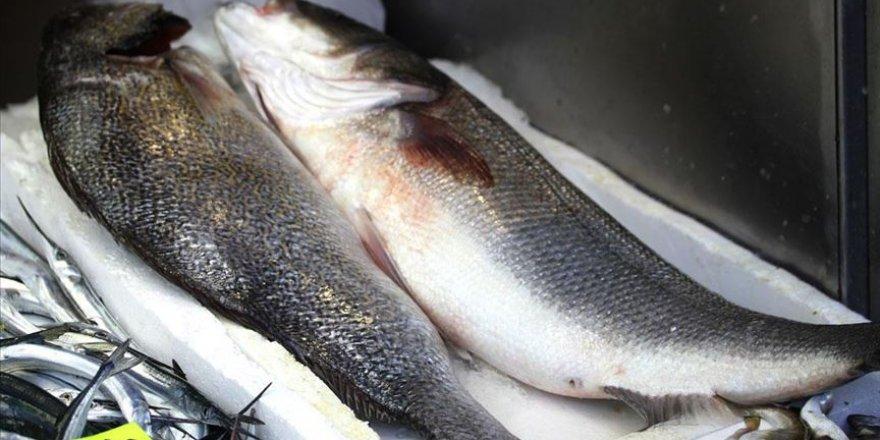 Batı Karadeniz'deki 'levrek kıtlığında' 3 balık 1600 liraya alıcı buldu