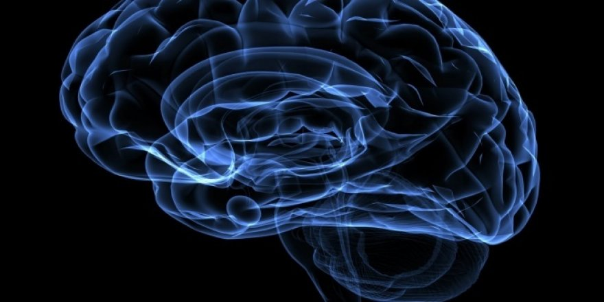 Beyin kullanılmayınca küçülüyor