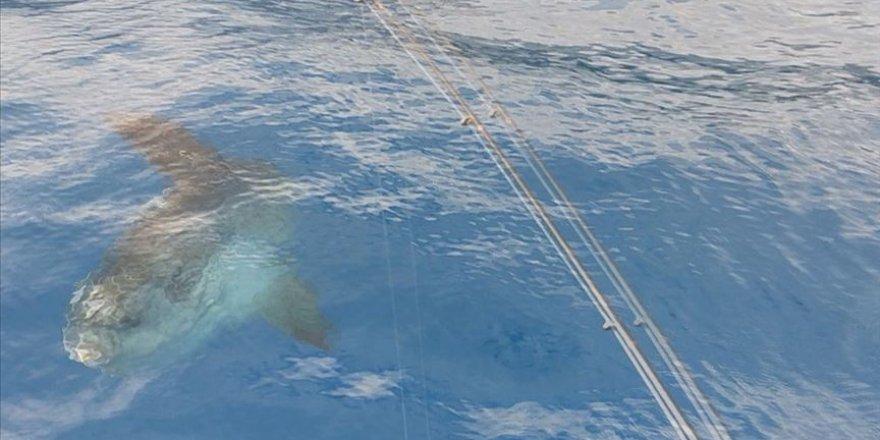 Antalya'da 'ay balığı' görüntülendi