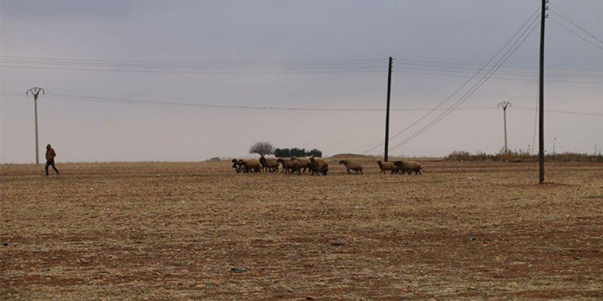 Tel Abyad'da hayvancılık faaliyetleri yeniden başladı