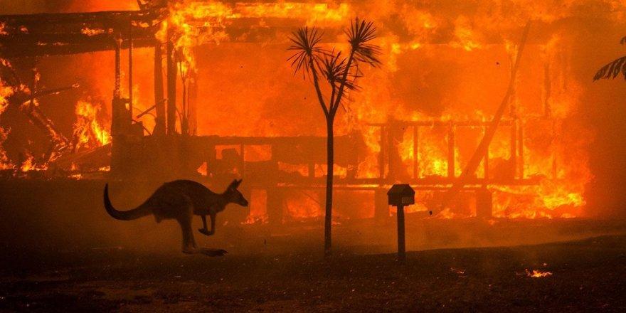 Yangın aylardır söndürülemiyor: 24 insan öldü, 480 milyon hayvan telef oldu