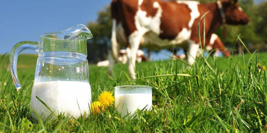 Kasım ayında 727 bin 917 ton inek sütü toplandı