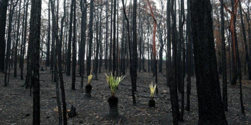 Avustralya'yı bu kez şiddetli yağışlar vurdu