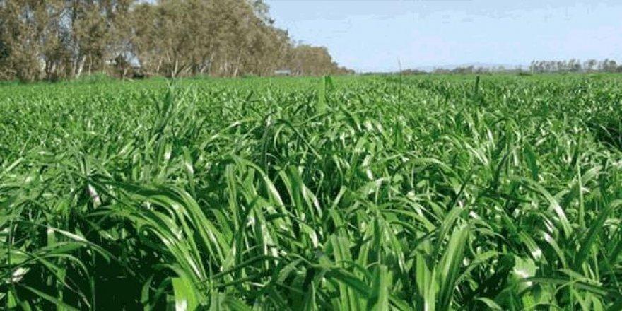 Aydın'da 10 bin çiftçiye 33 milyonluk yem bitkisi desteği