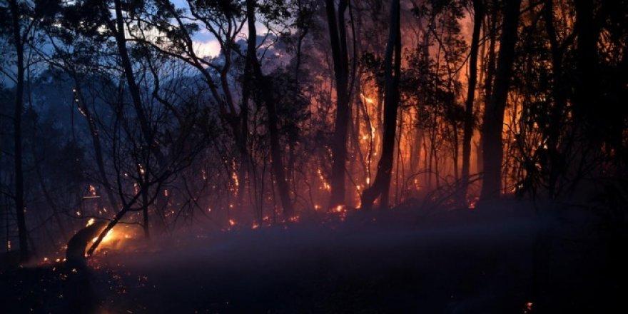 Avustralya'daki yangınlar aylar sonra ilk kez kontrol altına alındı