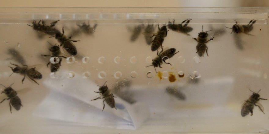 Kainat eczanesinden arı iğnesi hastalıklara şifa oluyor