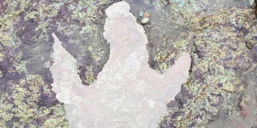 Fırtına 130 milyon yıllık dinozor ayak izini ortaya çıkarttı