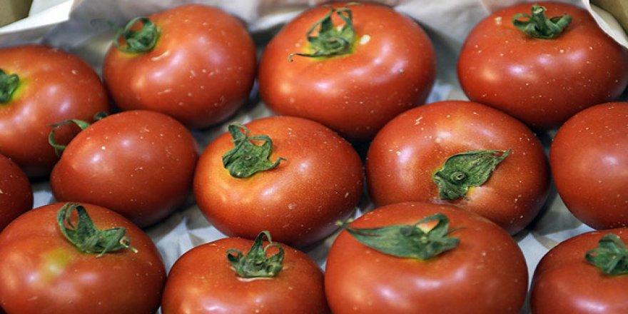 Rusya'ya domates ihracat kotası 50 bin ton artırıldı