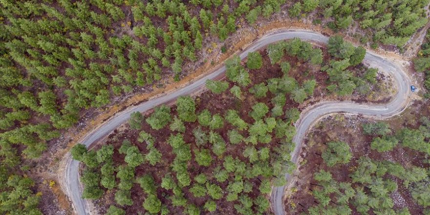 Orman Genel Müdürlüğünün Akdeniz Ormanları Projesi dünyada ilk 5'te
