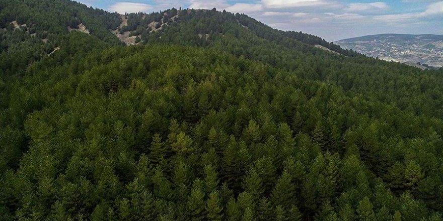 Orman zararlılarıyla mücadele için geçen yıl 7,7 milyon lira harcandı