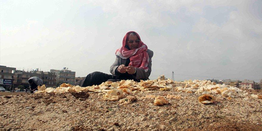Kuşların babası: 27 yıldır çöpten topladığı ekmeklerle kuşları besliyor