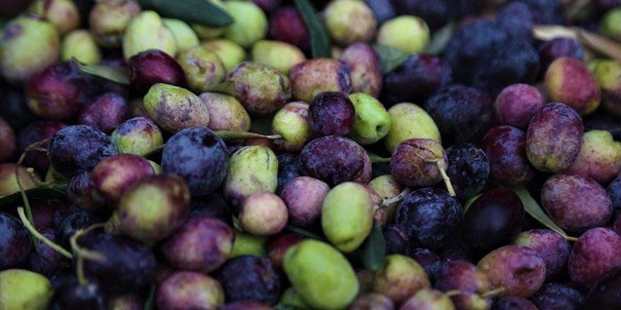 Bazı bitkisel ürün desteklerine yönelik başvuru tarihleri uzatıldı