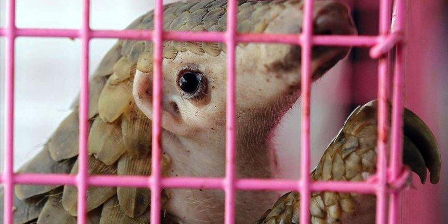 Gabon'da Kovid-19 bulaştırdıkları gerekçesiyle pangolin ile yarasanın tüketim ve satışları yasaklandı