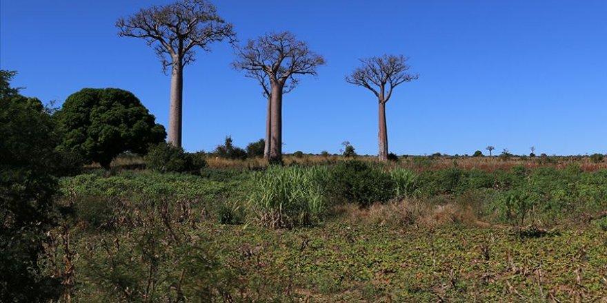 Madagaskar, açlık ve kuraklığa karşı acil durum planı oluşturdu