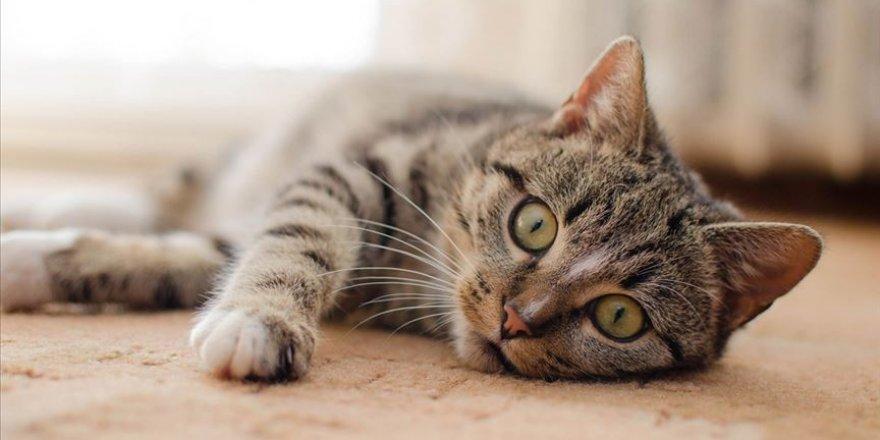 Kovid-19 ilk defa İngiltere'de bir kedide tespit edildi