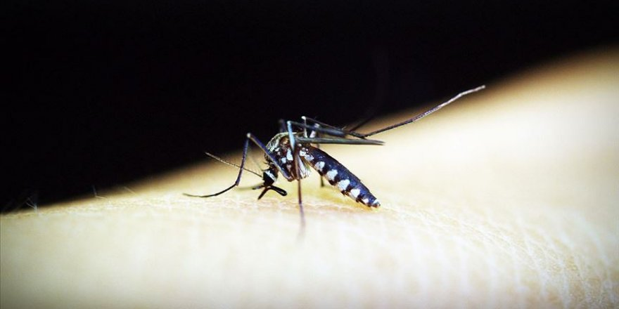 Nijerya'da binlerce çocuk sıtmaya yakalandı