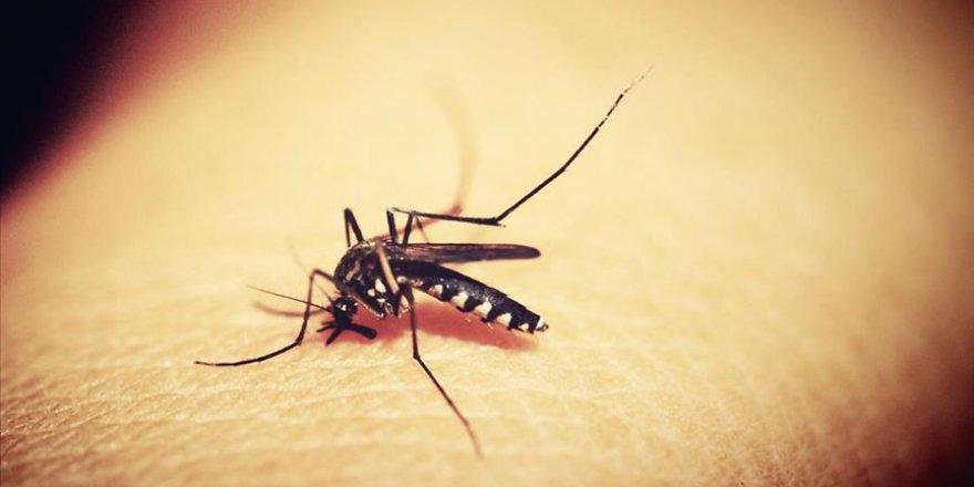 Sıtmaya yol açan parazitin, hastalığın tedavisinde kullanılan artemisinin maddesine dirençli türü keşfedildi