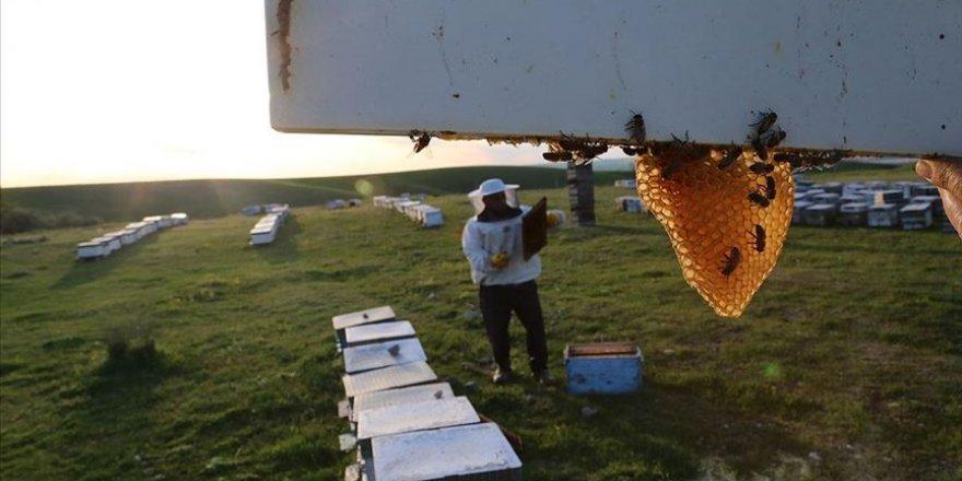 Arıcılar bal mesaisine hazırlanıyor