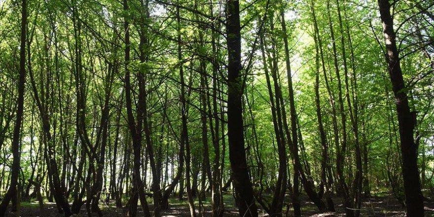 İstanbul'un yüzde 44,4'ü orman