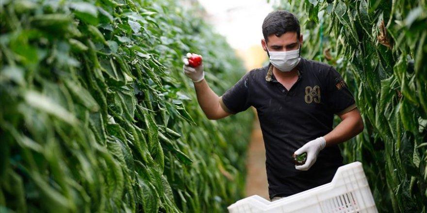 Pandemi sürecinde Ege Bölgesi'nin yaş meyve sebze ihracatı yüzde 45 arttı