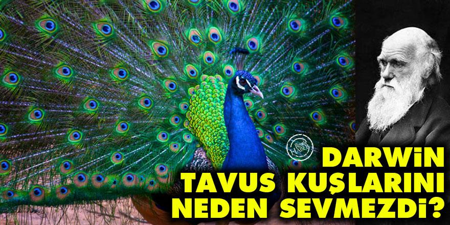 Darwin, tavus kuşlarını neden sevmezdi?