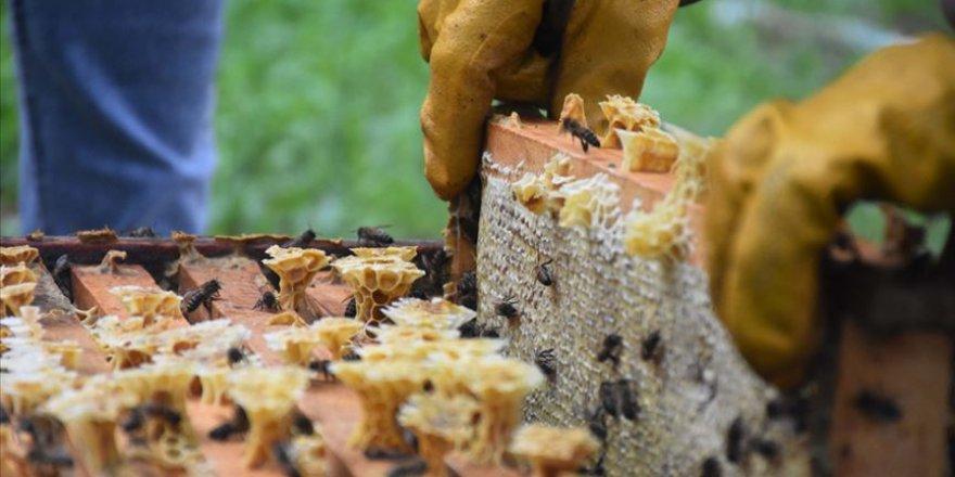 Salgında arı ürünlerine olan talep katlandı