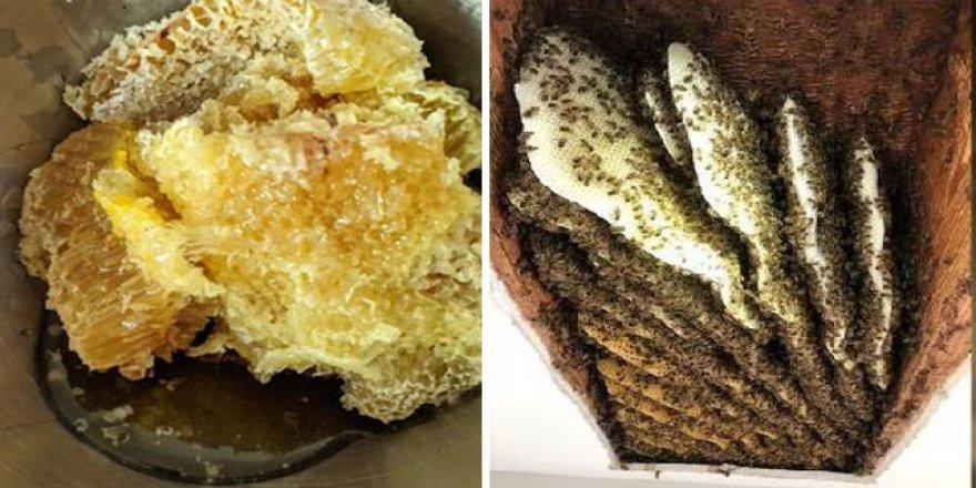 Subhanallah! Evin tavanından 60 kilo bal üreten 100 bin arı çıktı