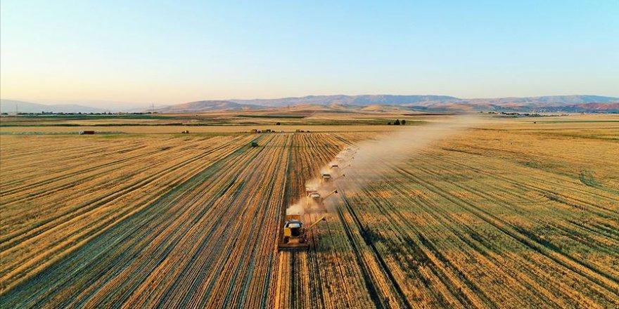 Organik ve iyi tarım uygulamaları meyvelerini veriyor
