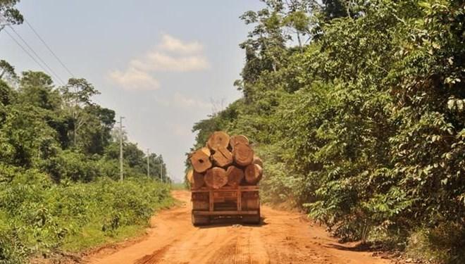 WWF: 'Salgın döneminde orman katliamı arttı'