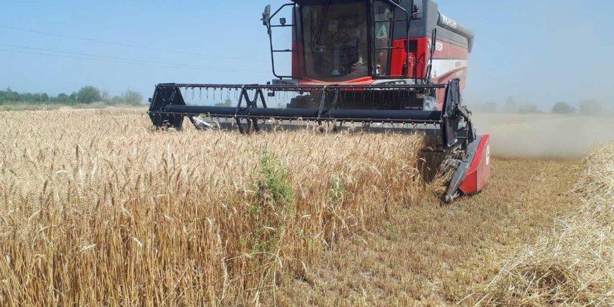 Adana'da buğday hasadına başlandı