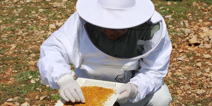 Adıyamanlı arıcılar sezonun ilk polen hasadına başladı