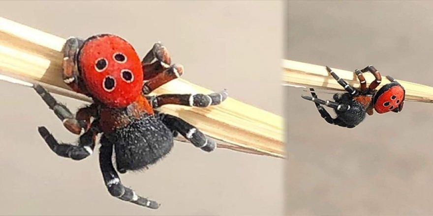 İlk başta uğur böceği zannetti, sonrasında gerçek ortaya çıktı