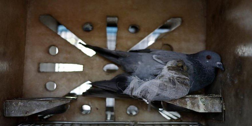Hindistan, Müslüman adamın güvercinini casuslukla suçladı!