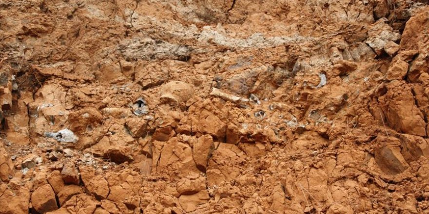 Pakistan'da 45 milyon yıllık olduğu tahmin edilen hamsi fosili bulundu